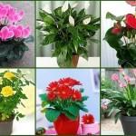 Чудо - раствор, который спасет самые безнадежные цветы
