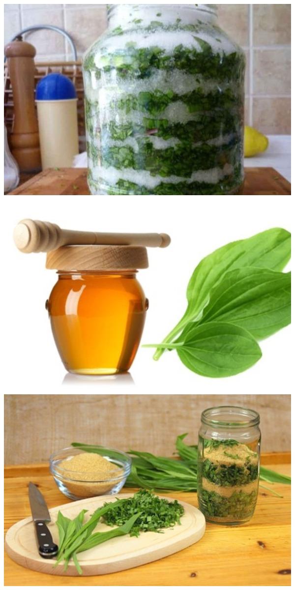 Подорожник с сахаром или на меду — ценнейшее лекарство на весь год!