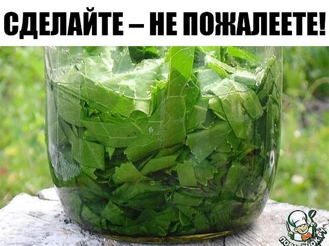 Лечебные свойства и рецепты из листьев хрена.
