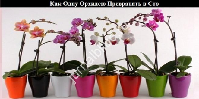 Как Одну Орхидею Превратить в Сто
