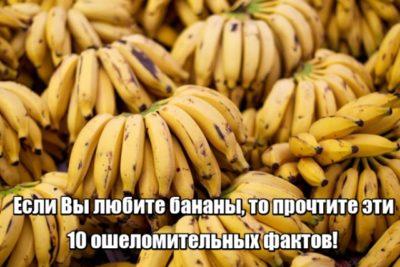 Если Вы любите бананы, то прочтите эти 10 ошеломительных фактов!