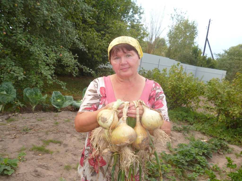 Как вырастить хороший урожай лука? 10 секретов ухода за луком