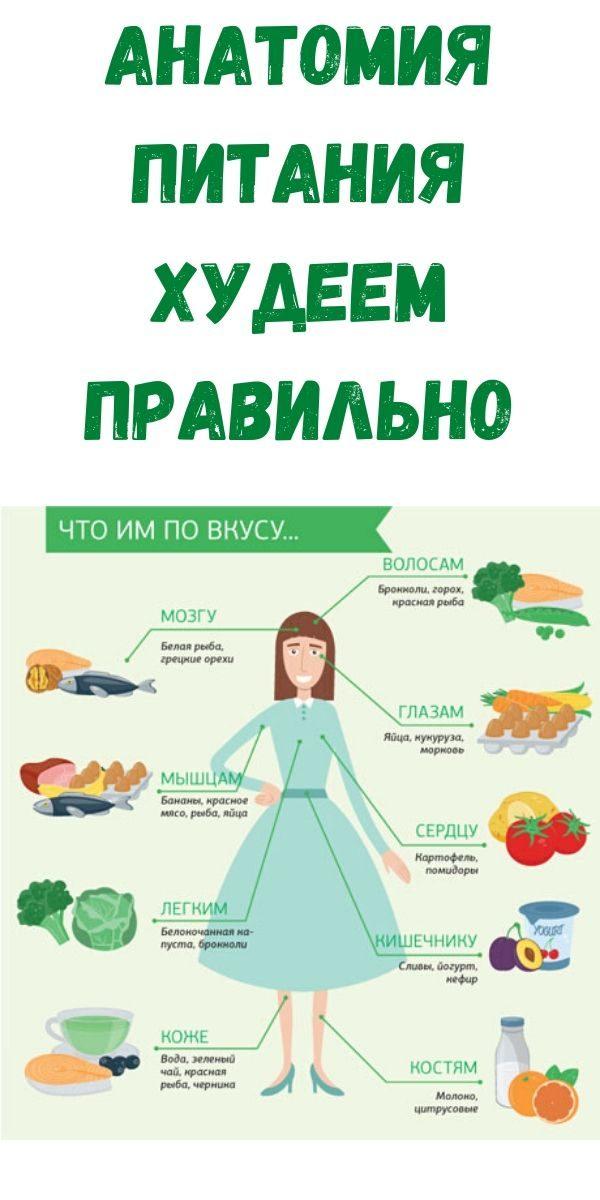 anatomiya-pitaniya-hudeem-pravilno