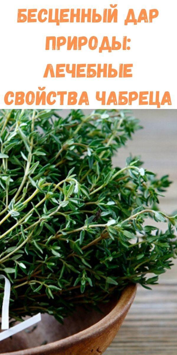 bestsennyy-dar-prirody_-lechebnye-svoystva-chabretsa