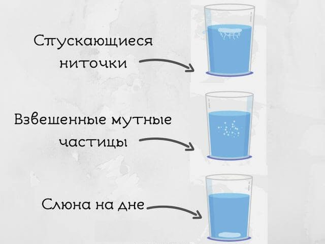 content_gribok_kandida_v_organizme5
