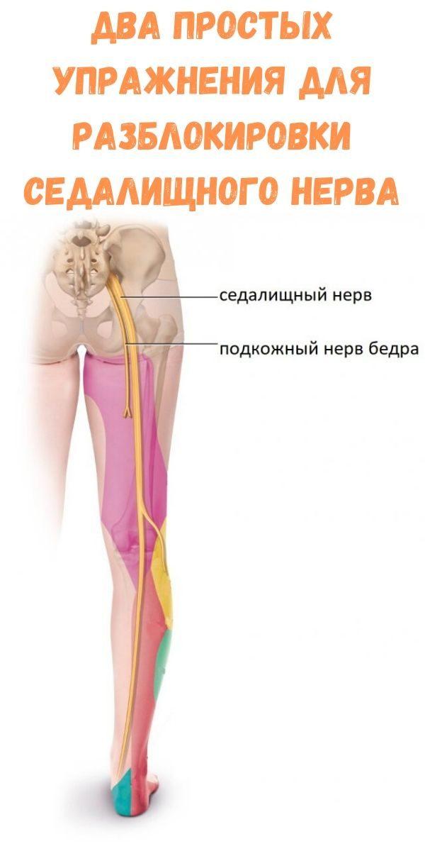 dva-prostyh-uprazhneniya-dlya-razblokirovki-sedalischnogo-nerva
