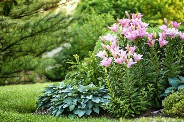 garden-01-640x425-1