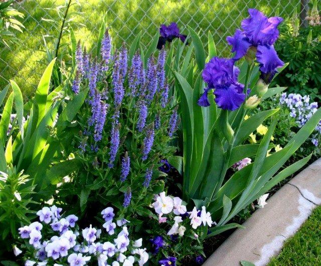 garden-05-640x531-1