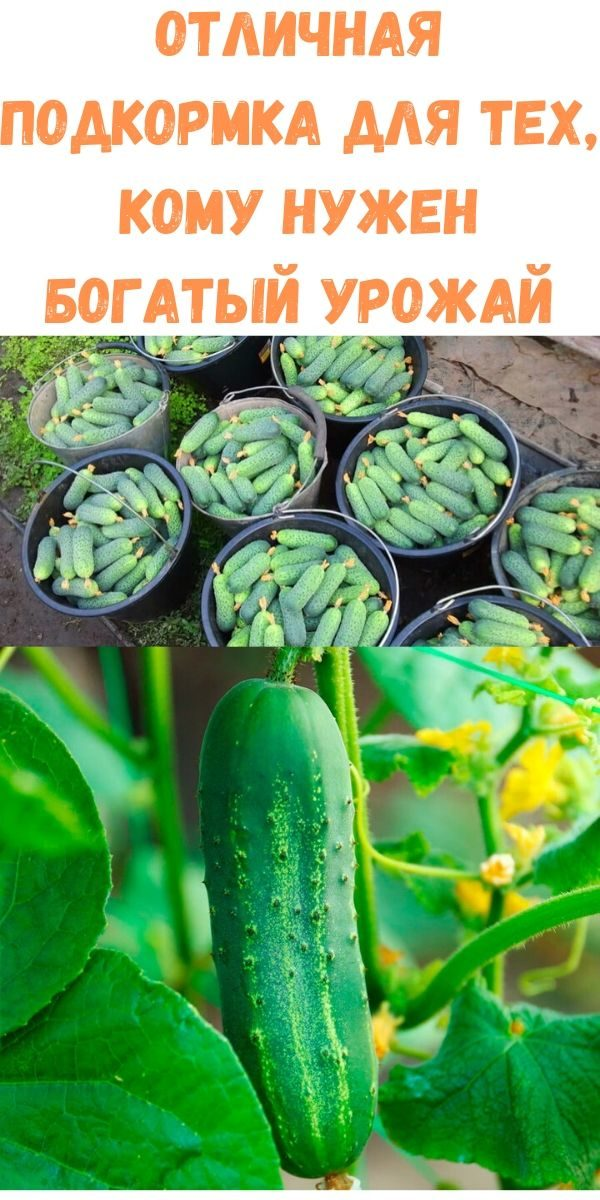 otlichnaya-podkormka-dlya-teh-komu-nuzhen-bogatyy-urozhay