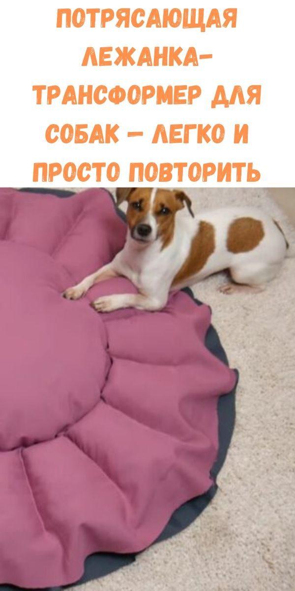 potryasayuschaya-lezhanka-transformer-dlya-sobak-legko-i-prosto-povtorit