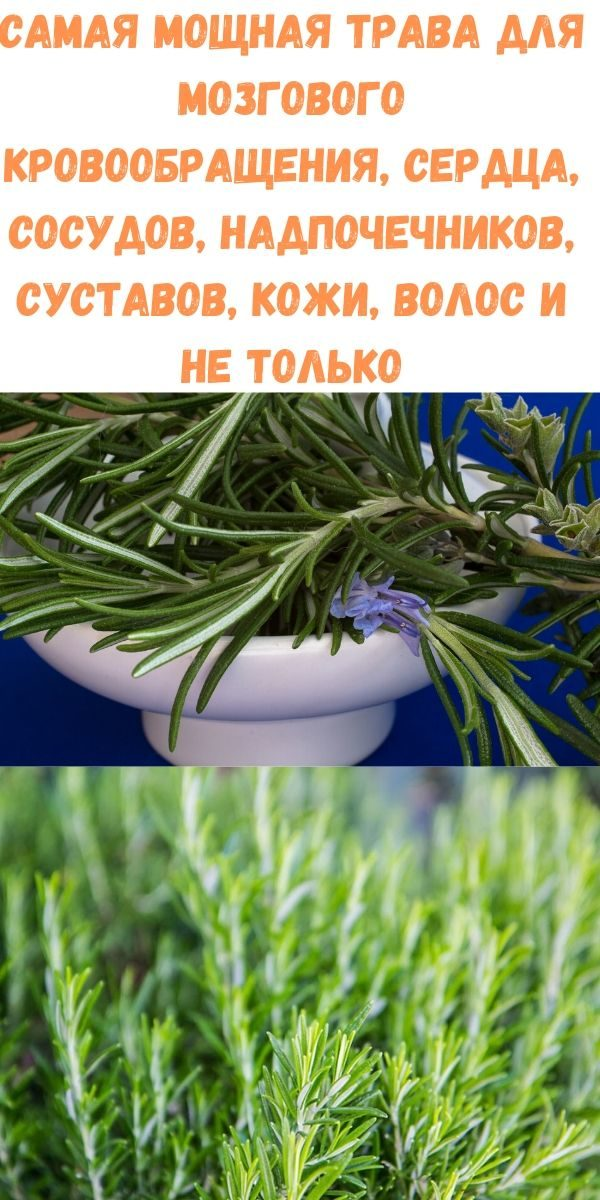 samaya-moschnaya-trava-dlya-mozgovogo-krovoobrascheniya-serdtsa-sosudov-nadpochechnikov-sustavov-kozhi-volos-i-ne-tolko