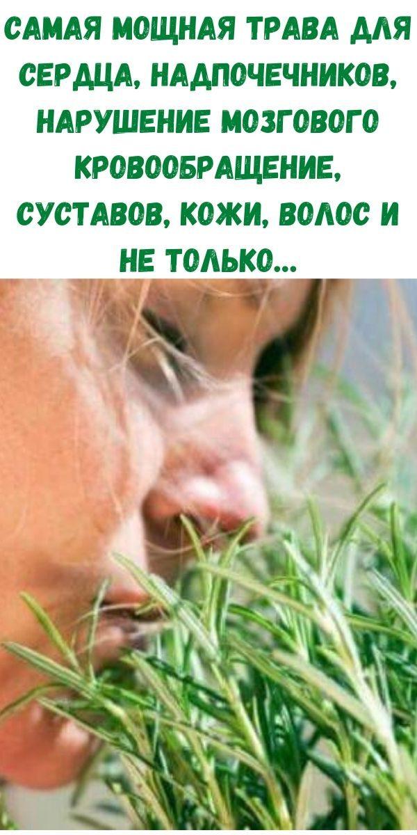 samaya-moschnaya-trava-dlya-serdtsa-nadpochechnikov-narushenie-mozgovogo-krovoobraschenie-sustavov-kozhi-volos-i-ne-tolko