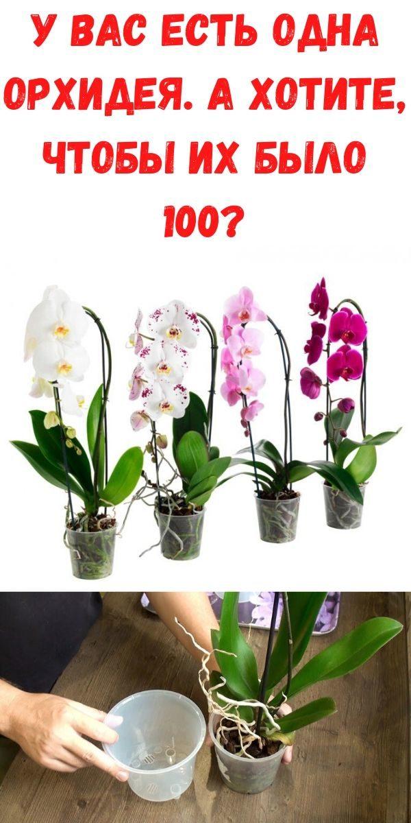 u-vas-est-odna-orhideya-a-hotite-chtoby-ih-bylo-100_