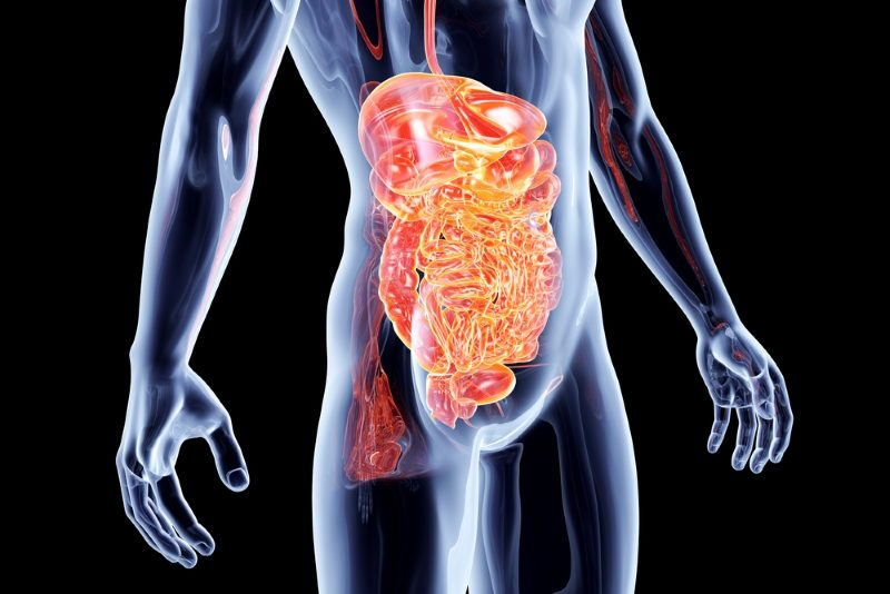 the-intestines-3d-rendered-anatomical-illustration