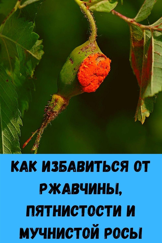ak-ochictit-gaymopovye-i-lobnye-pazuhi-ot-gnoya-i-clizi-5