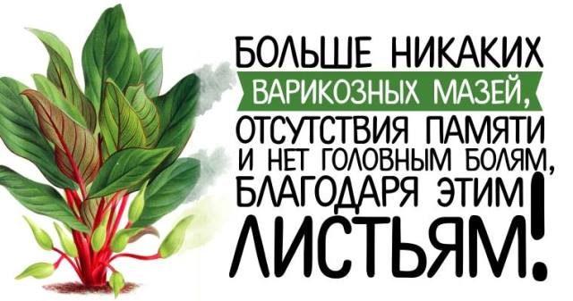 bolshe-nikakih-varikoznyh-mazej-otsutstviya-pamyati-i-net-golovnym-bolyam-blagodarya-etim-listyam-11