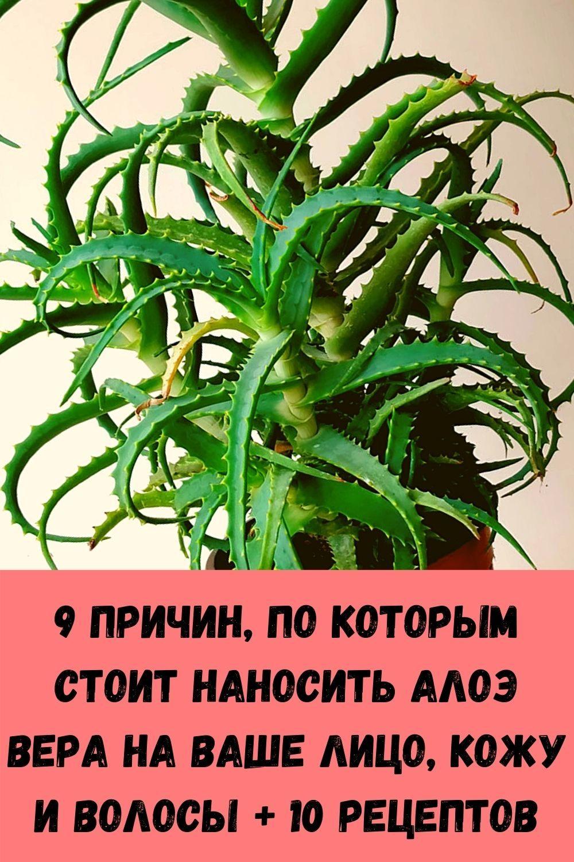 dobavte-1-kaplyu-masla-oregano-v-vodu-i-posmotrite-chto-proizoydet-s-vashimi-legkimi-19