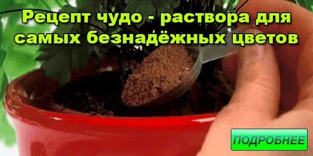 reczept-chudo-rastvora-dlya-samyh-beznadyozhnyh-czvetov-1-1