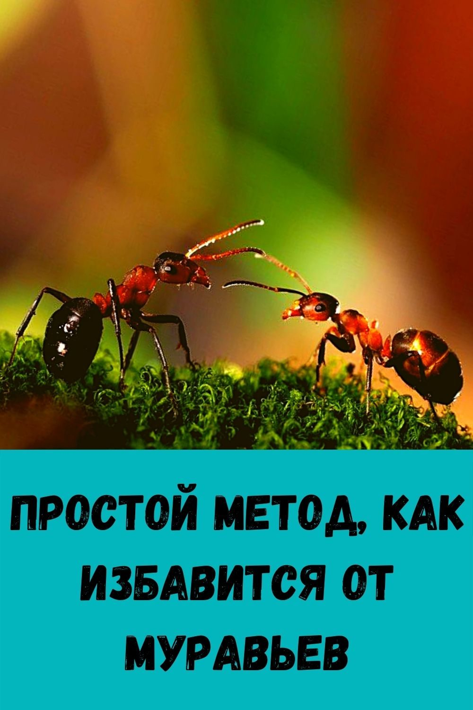 zachem-hranit-lavrovyy-list-v-koshelke_-5