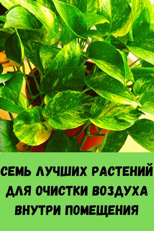 zamochite-4-mindalya-v-vode-na-noch-i-udivitelnye-veschi-budut-proishodit-s-vashim-telom-8